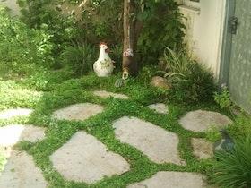 ללא דשא