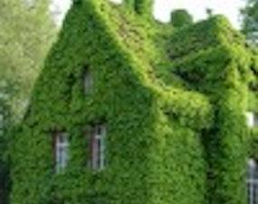 """קירור חדרי הבית באמצעות """"קיר ירוק"""""""