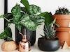 צמחיה אורבנית: כך תשלבו צמחייה באווירה עירונית