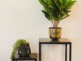 2 קונסולות עם צמחים עליהם