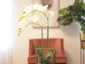 צמח לבן על שולחן עגול