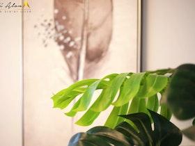 צמח עם ארונית בגדים