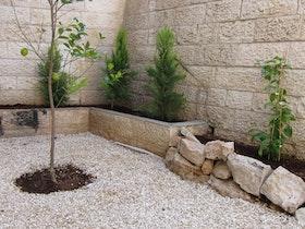 עץ לימון במרכז החצר